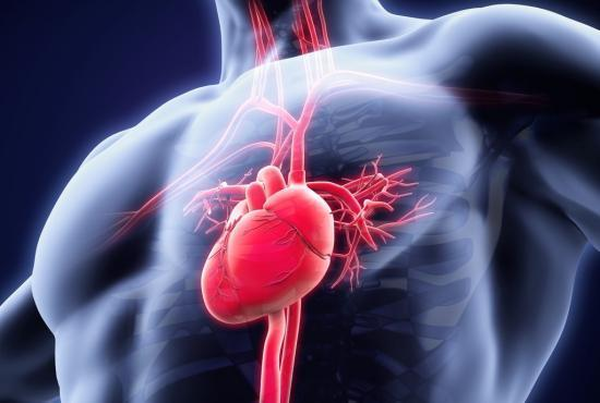 the heart consists of two ventricles and two atria tachycardia occurs when these beat too fast - Apa yang Perlu Diketahui tentang Takikardia ?